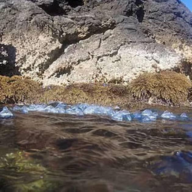 Primavera in mare – Il momento della Velella